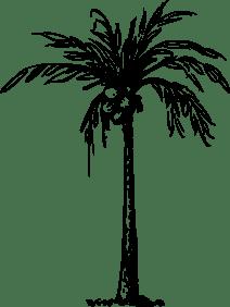 noix-de-coco-palmier